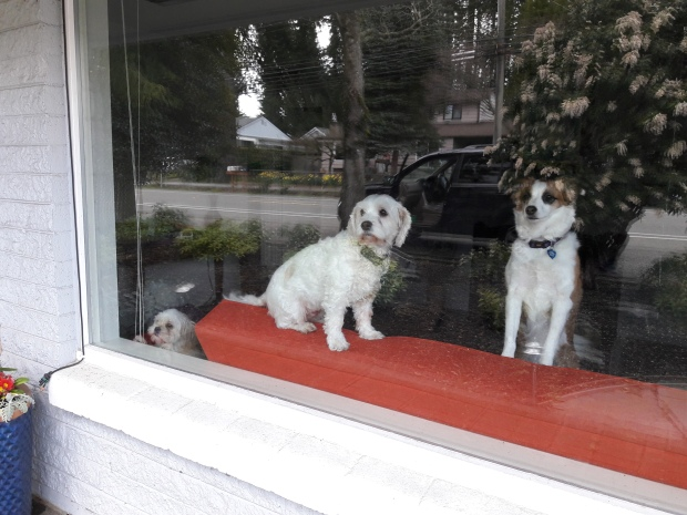 dog in window.jpg